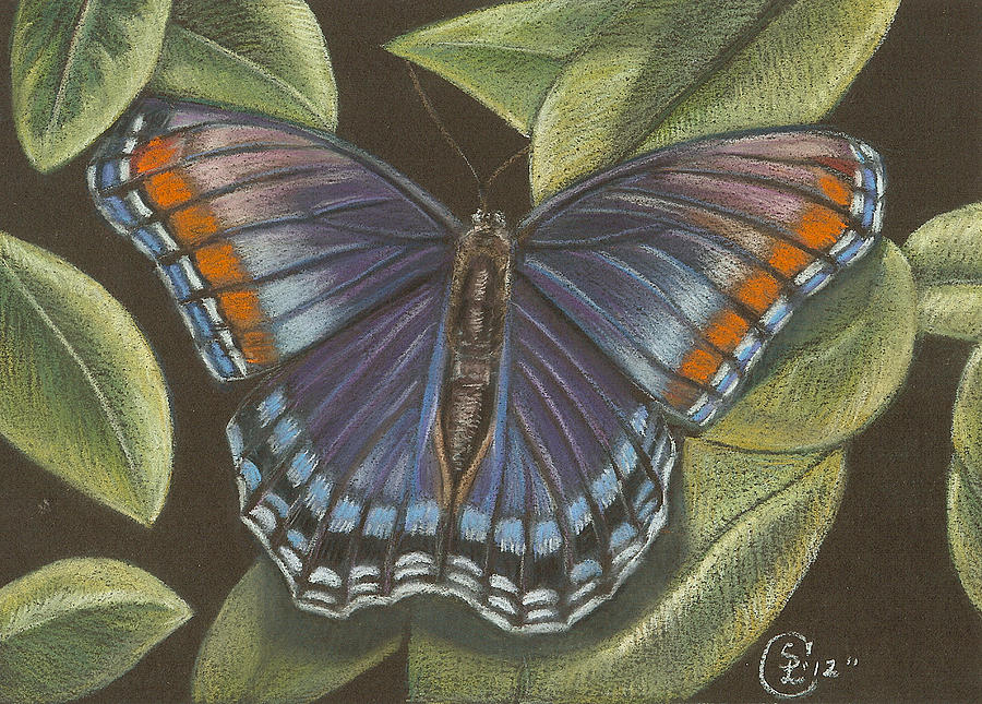 Butterfly Pastel - Blue Butterfly  by Stephanie L Carr