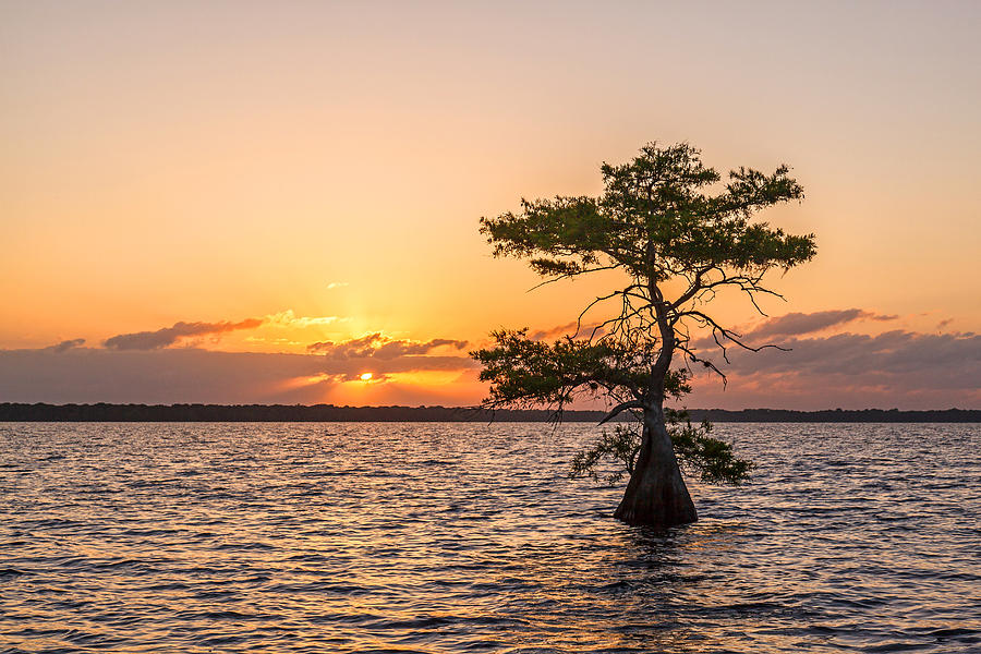 Usa Photograph - Blue Cypress Lake Sunrise by Claudia Domenig