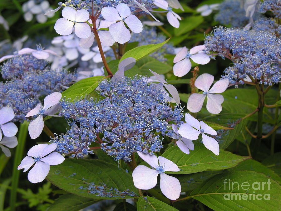 Blue Photograph - Blue by Diane Greco-Lesser