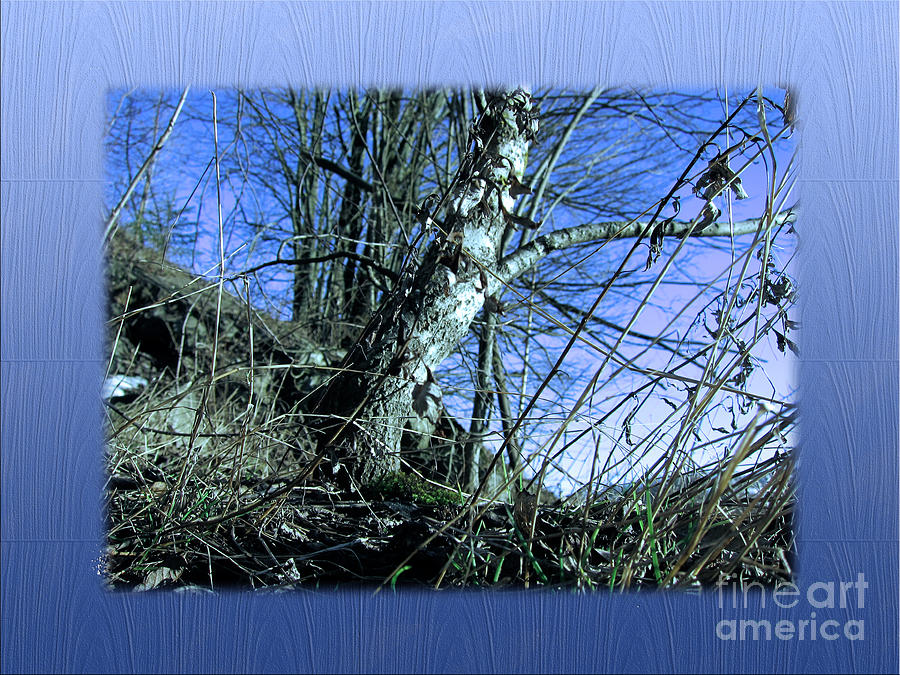 Spring Photograph - Blue Early Spring by Michelle Bergersen