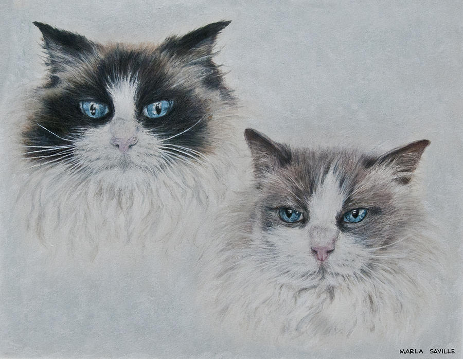 Cats Drawing - Blue Eyed Cats by Marla Saville