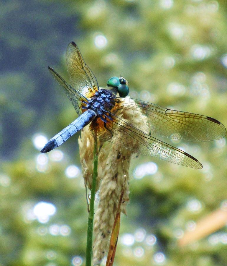 Blue Eyes Photograph by Todd Sherlock