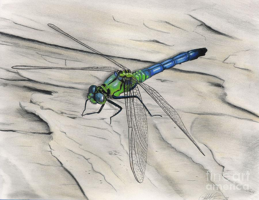 Dragonfly Drawing - Blue-green Dragonfly by Christian Conner
