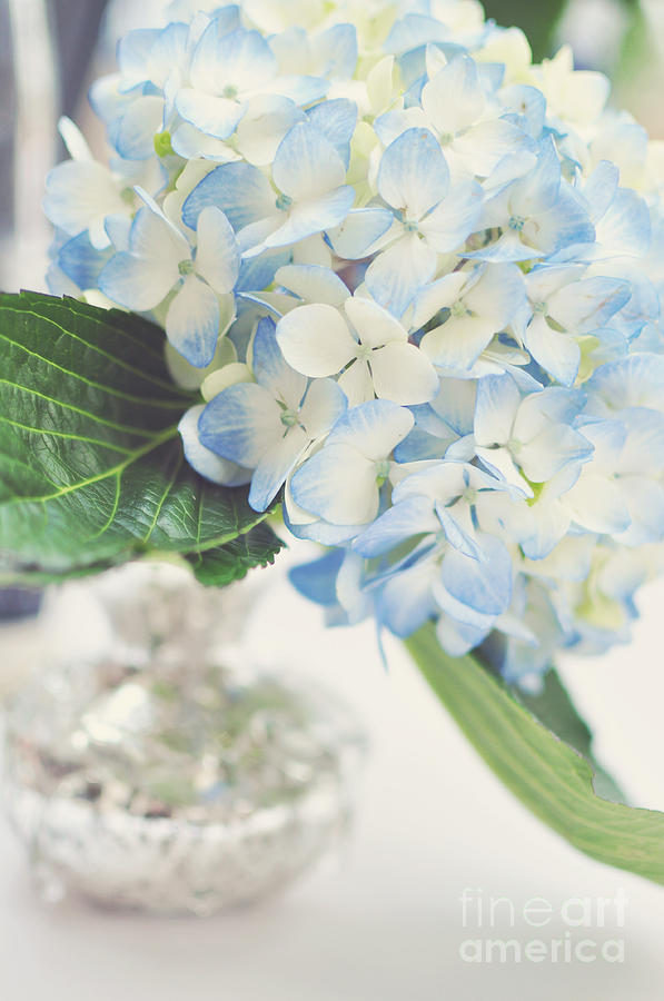 Photograph Photograph - Blue Hydrangea by Tamara Adams