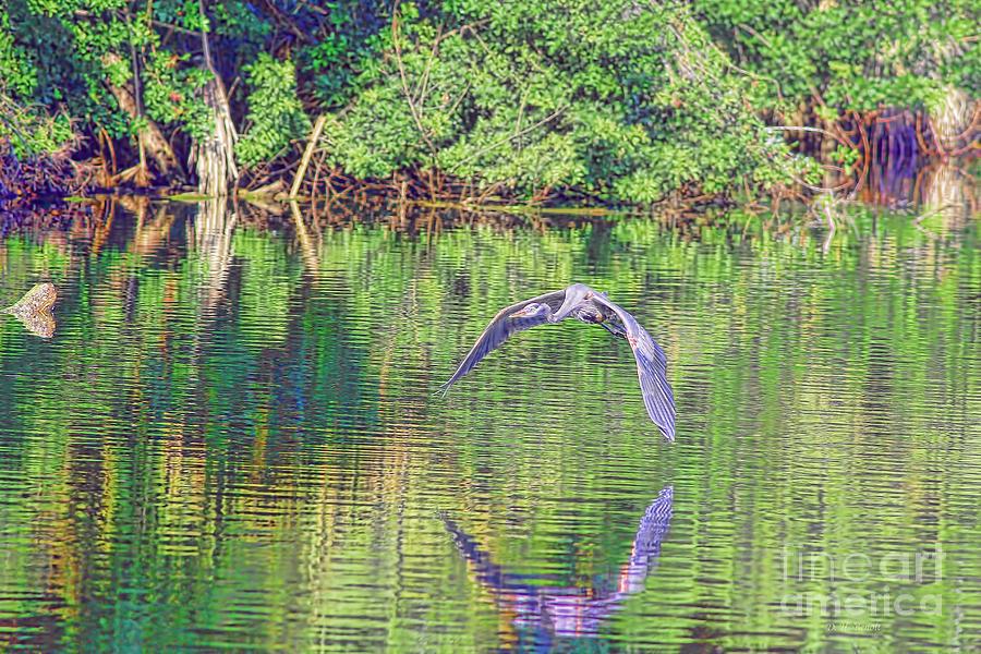 Heron Photograph - Blue In Holly Hill by Deborah Benoit