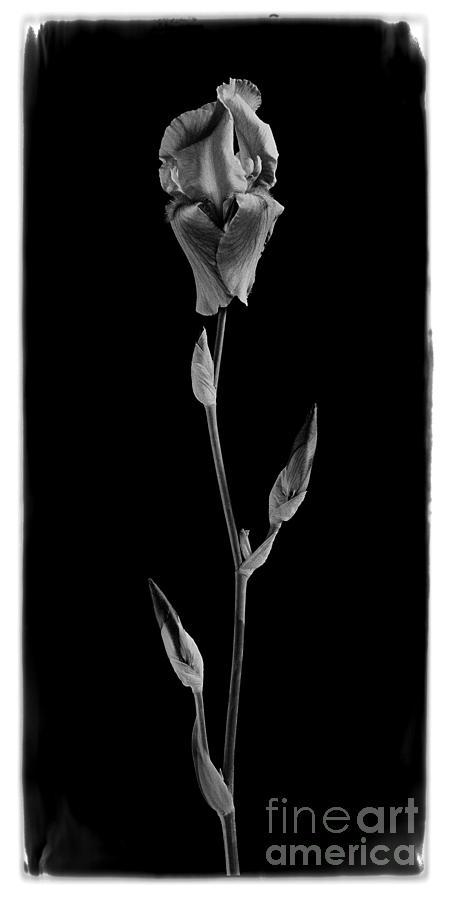 Flowers Photograph - Blue Iris by Aldo Cervato