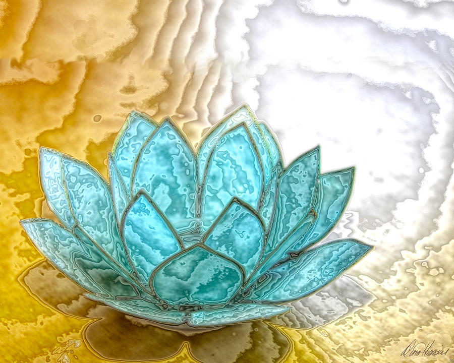 Blue Lotus Photograph By Diana Haronis