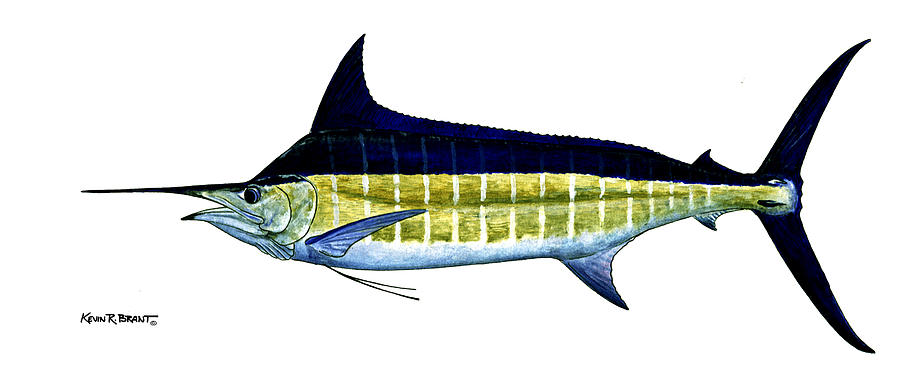 Blue Marlin Painting - Blue Marlin by Kevin Brant