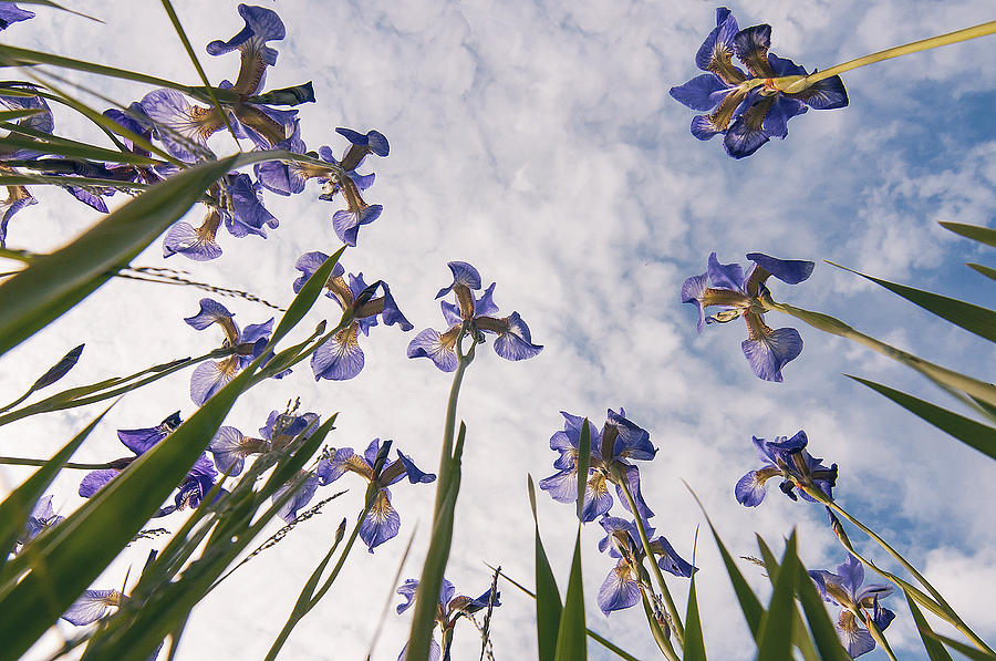Blue Flowers Photograph - Blue by Micael  Carlsson