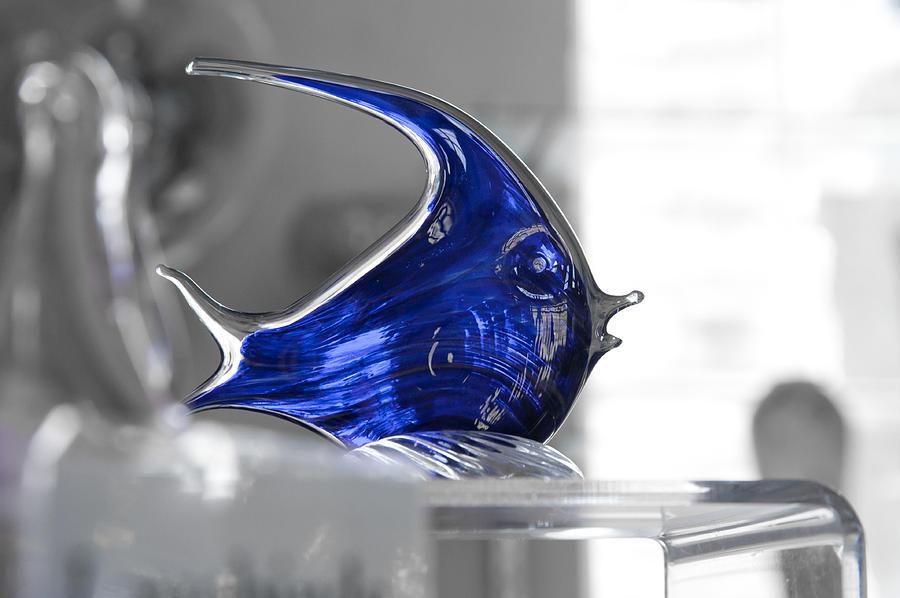 Fish Photograph - Blue by Michael Braxenthaler