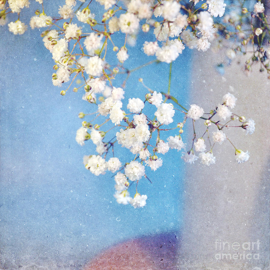 Flowers Photograph - Blue Morning by Lyn Randle