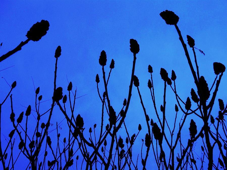 Landscape Photograph - Blue Morning by Todd Sherlock