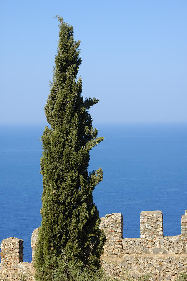 Serene Photograph - Blue Ocean And Sky Green Tree - Serene And Calming  by Matthias Hauser