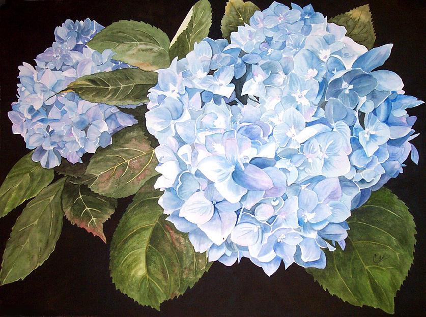 Hydrangea Painting - Blue On Blue by Karen Casciani