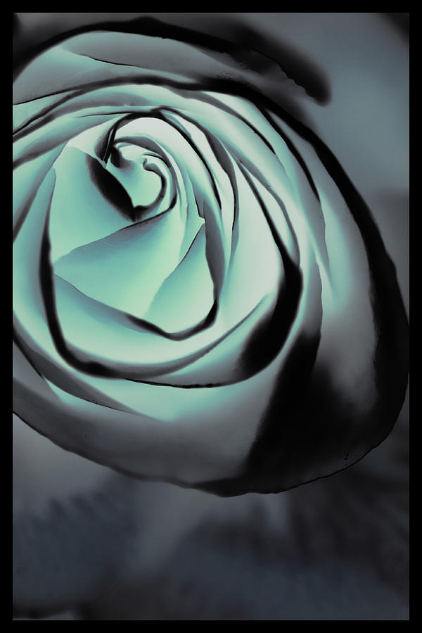 Florals Photograph - Blue On Blue by Linda Dunn