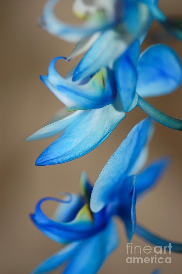 Landscape Photograph - Blue Orchid  by Melissa Haley