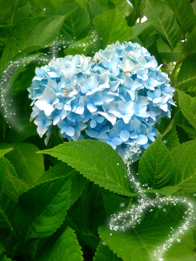 Blue Pom Flower Photograph by Lee Yang