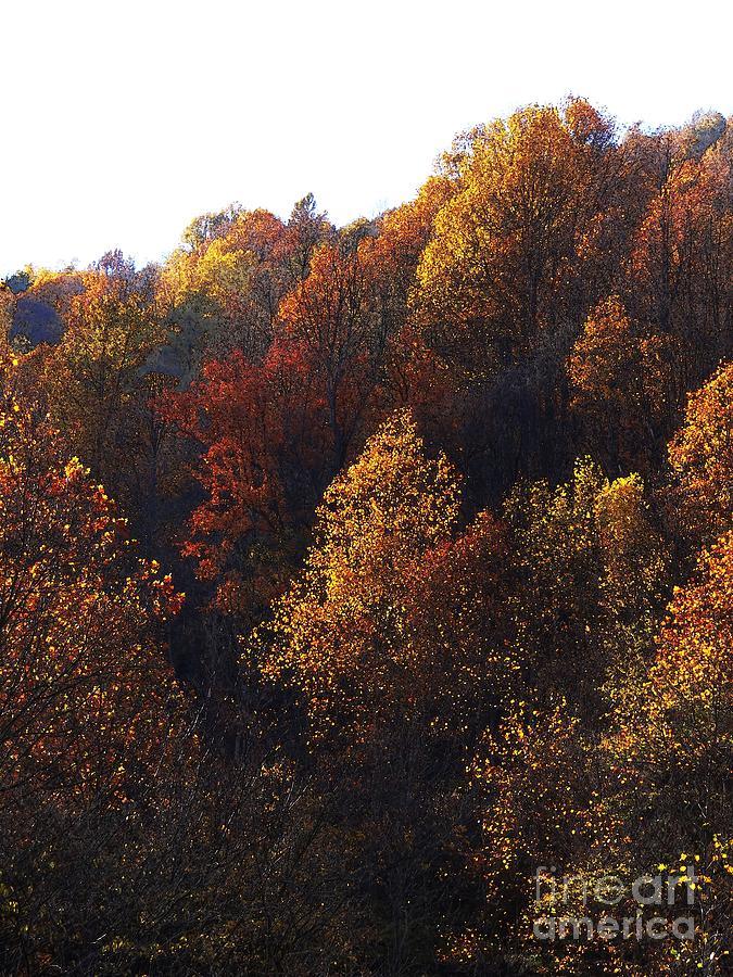 Blue Ridge Photograph - Blue Ridge 15 by Steven Lebron Langston