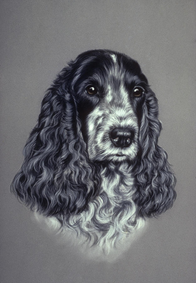 Blue Roan Cocker Spaniel Pastel By Patricia Ivy