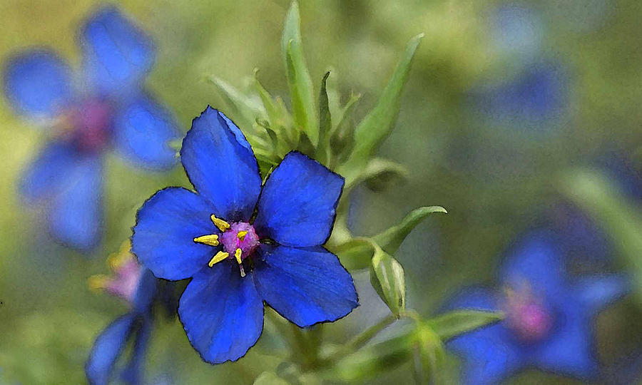 Flowers Photograph - Blue Royalty by Beverly Hanson