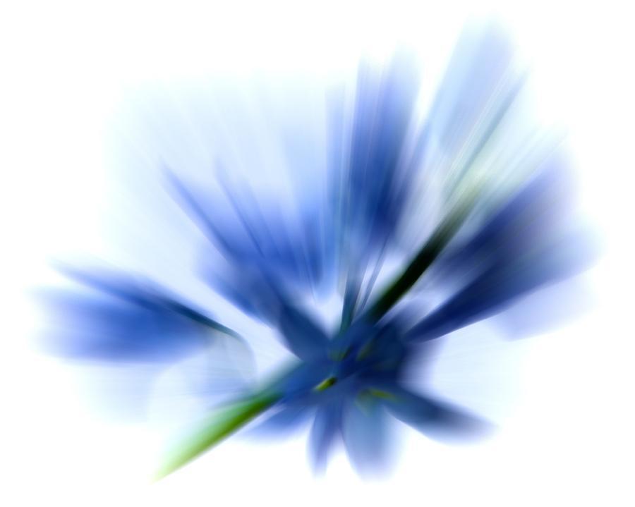 Bluebells Photograph - Blue by Sharon Lisa Clarke