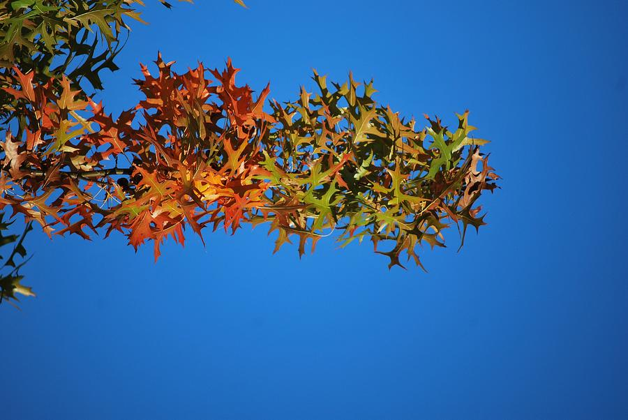 Autumn Photograph - Blue Skies And Fall Leaves by Michelle Cruz