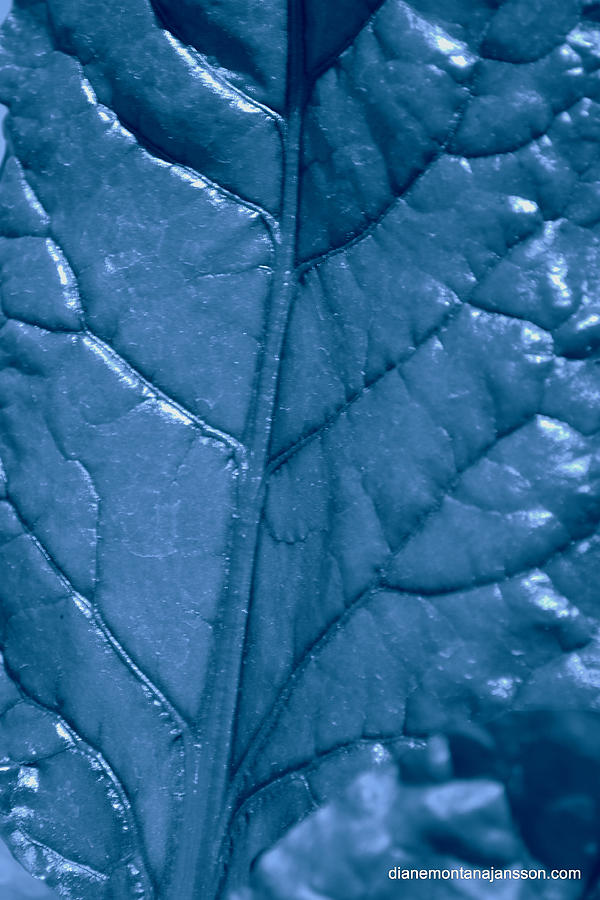 Leaf Photograph - Blue Songs by Diane montana Jansson