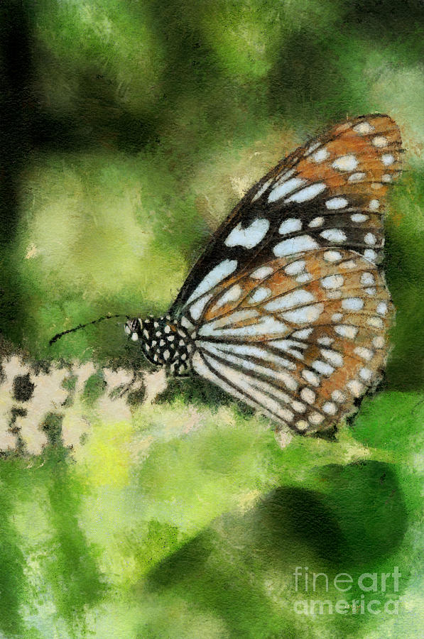 Butterfly Photograph - Blue Tiger by Lois Bryan