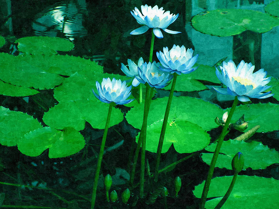 Water Digital Art - Blue Water Lily by Design Windmill