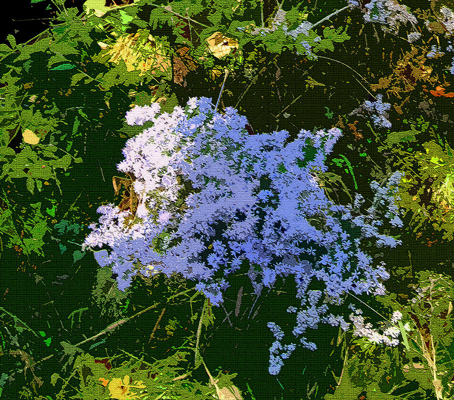 Blue Photograph - Blue Wild Flowers by Mindy Newman