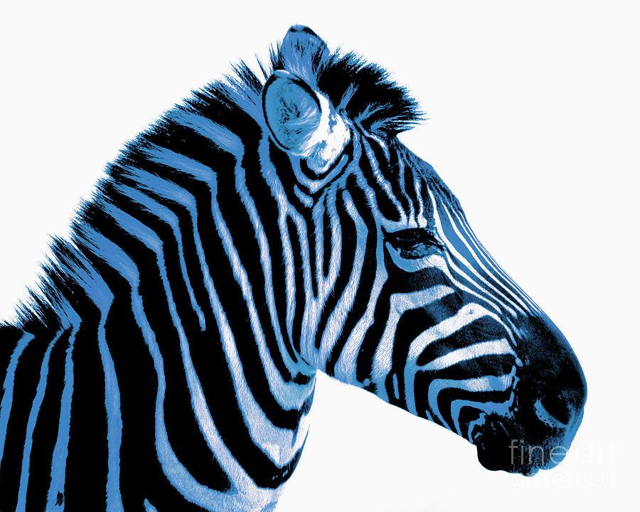 Blue Zebra Photograph - Blue Zebra Art by Rebecca Margraf