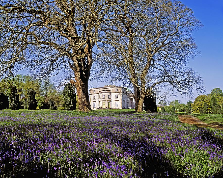 Beauty In Nature Photograph - Bluebells In The Pleasure Grounds, Emo by The Irish Image Collection