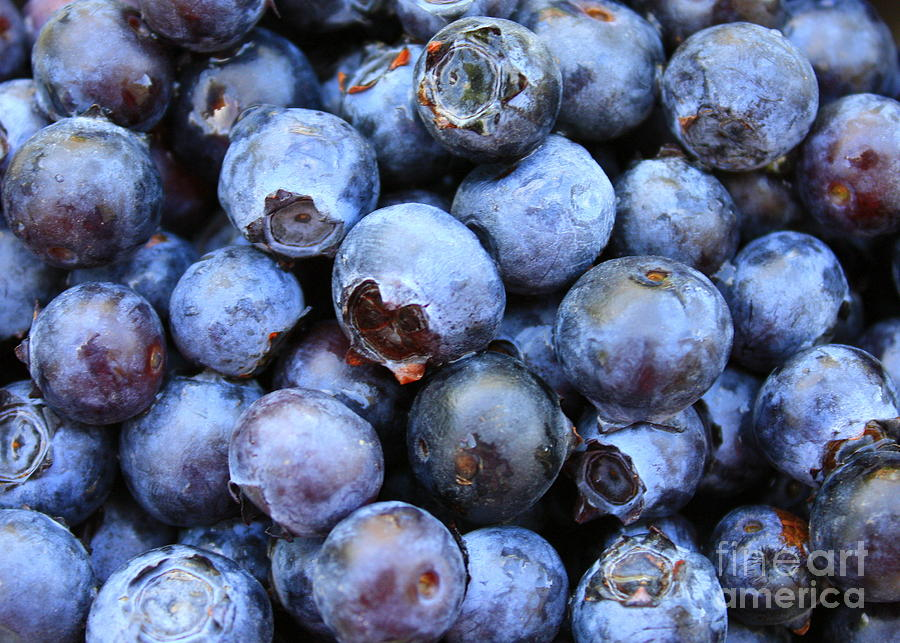 Food Photograph - Blueberries by Carol Groenen