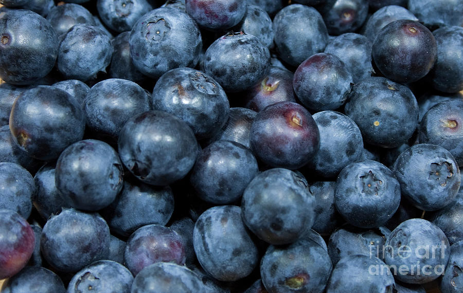 Blueberries Photograph - Blueberries by Michael Waters