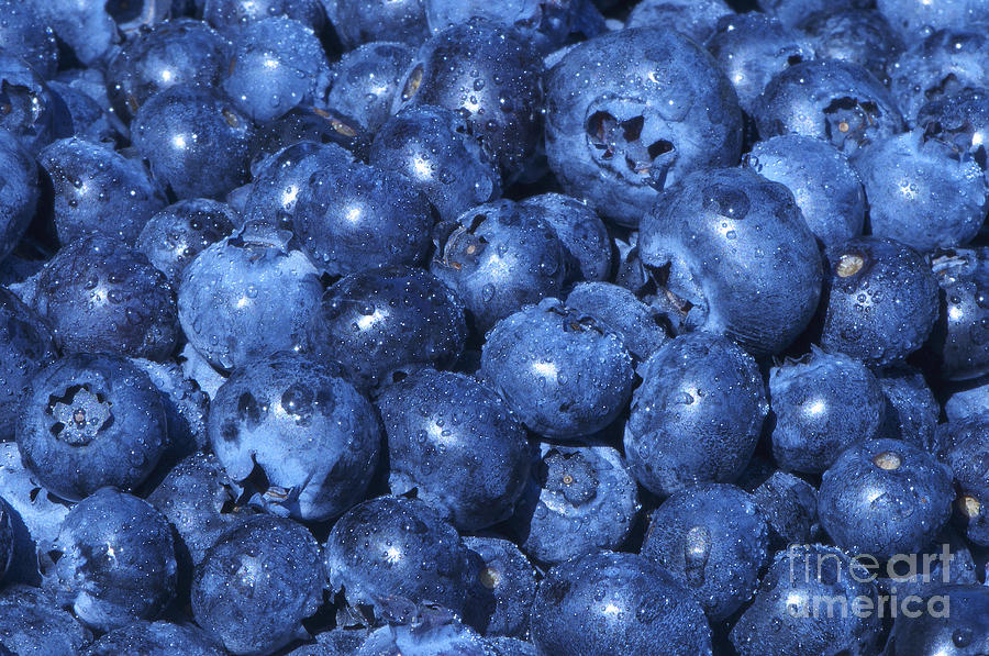 Blueberry Photograph - Blueberries With Waterdrops by Sharon Talson