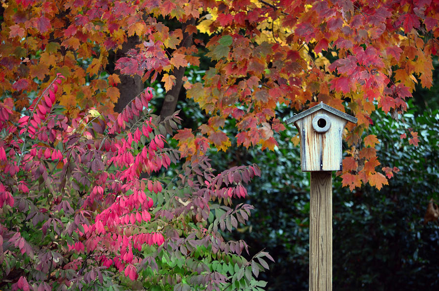Fall Photograph - Bluebird House Color Surround by Sandi OReilly