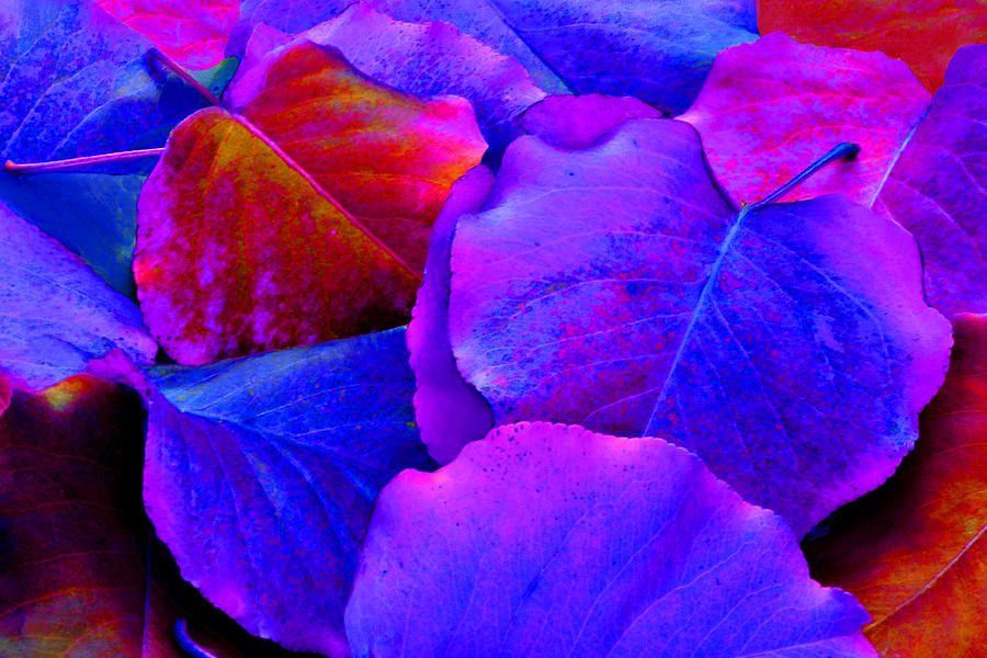 Colorful Photograph - Bluish Purple And Pink Leaves by Sheila Kay McIntyre