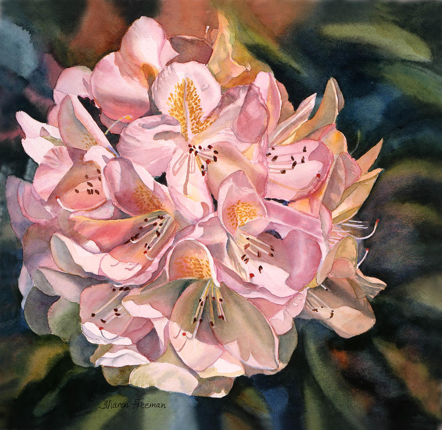 Pink Painting - Blushing Pink Rhododendron  by Sharon Freeman