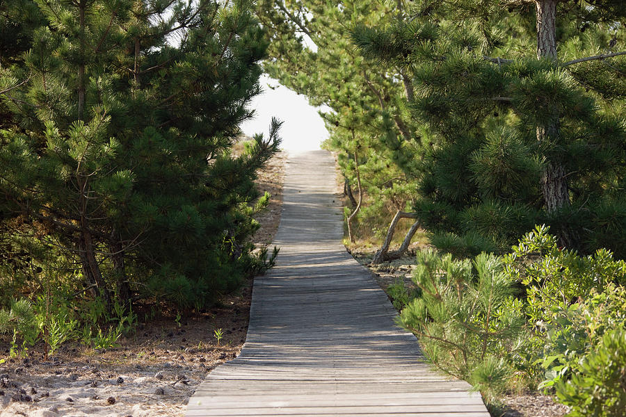 Horizontal Photograph - Boardwalk Footpath To The Beach. by Schedivy Pictures Inc.