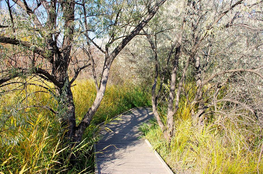 Osoyoos Photograph - Boardwalk To The Birds by John  Greaves