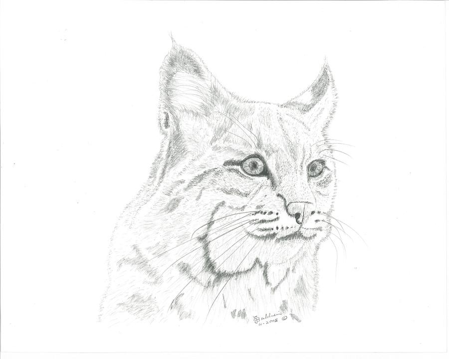 Bob Cat 2 Drawing By Ej John Baldwin