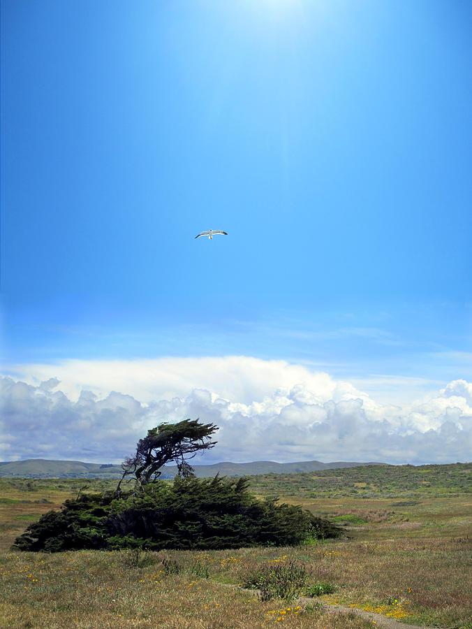 Luminist Photograph - Bodega Bay by Ric Soulen