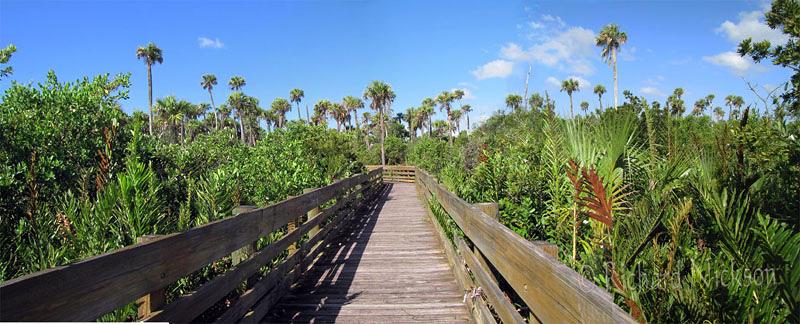 Florida Photograph - Borad Walk - Peck Lake Park by Richard Nickson