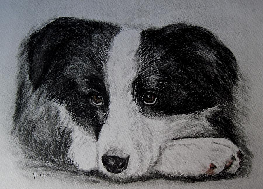 Dog Drawing - Borden Collie Pup by Joan Pye