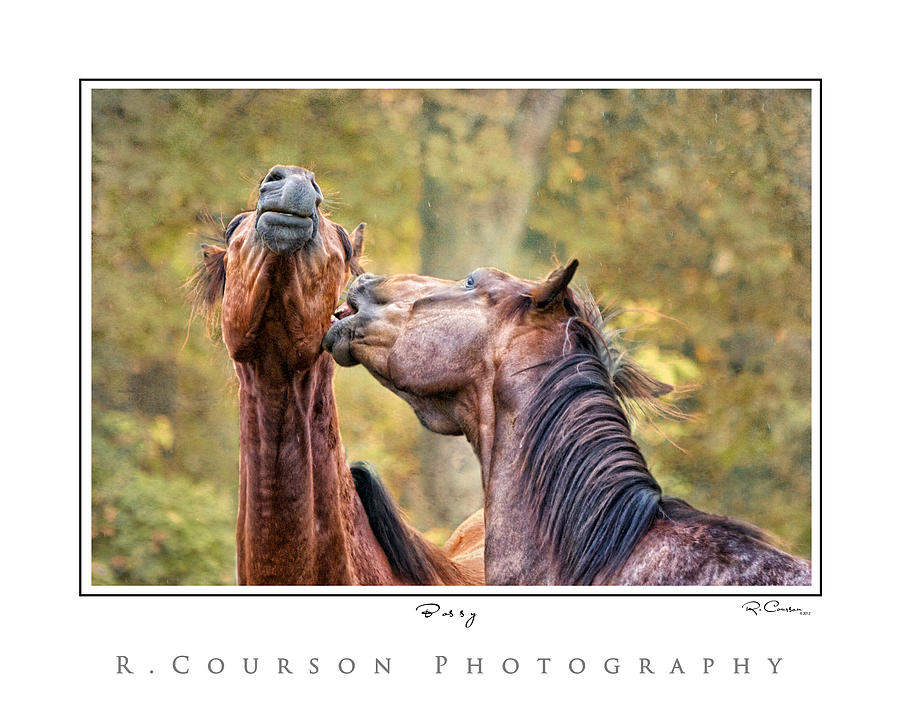 Horse Photograph - Bossy by Ryan Courson