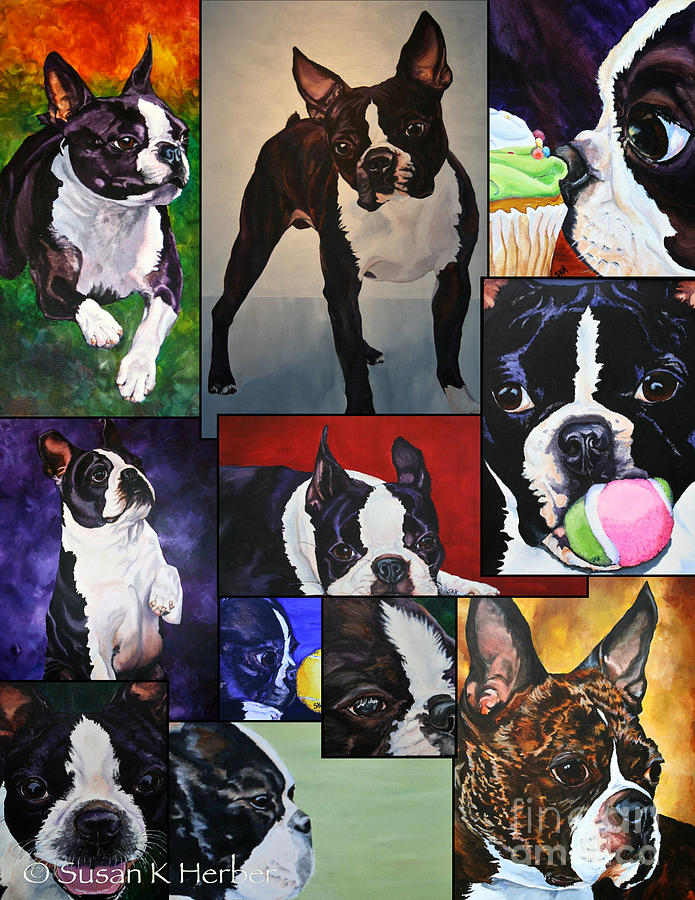 Animal Painting - Boston Acrylic Collage by Susan Herber