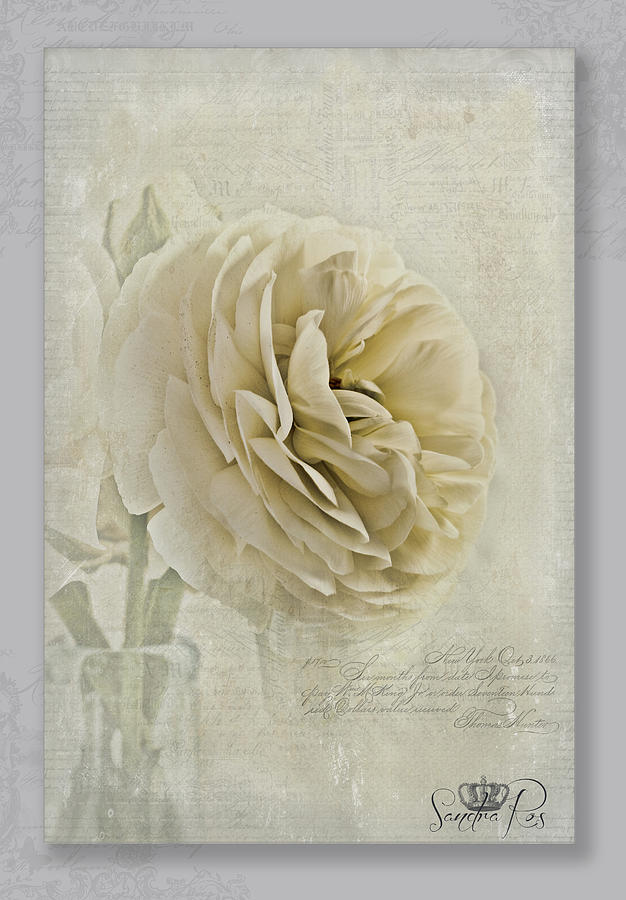 Flower Photograph - Botanical Notes  by Sandra Rossouw