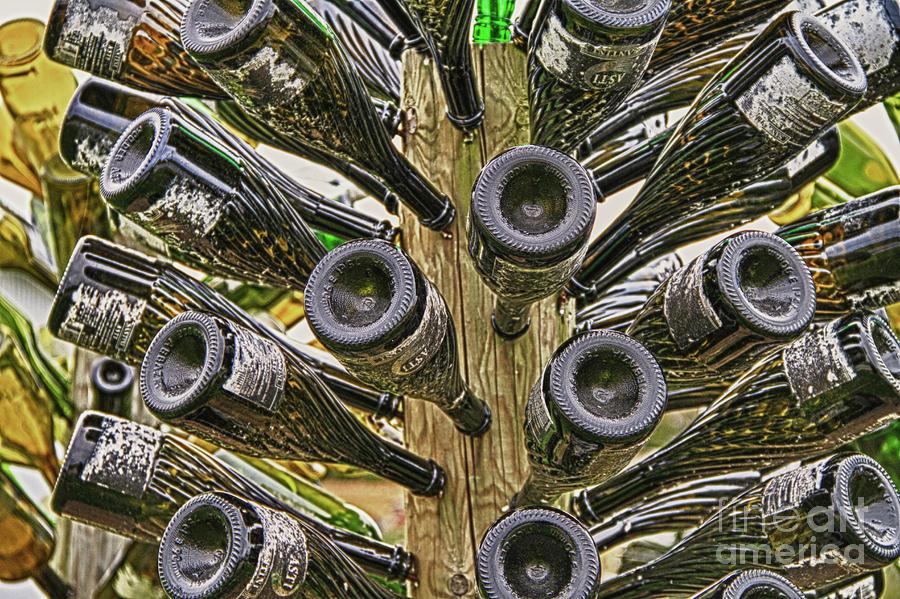Bottal Tree-2 Photograph by John Pensis
