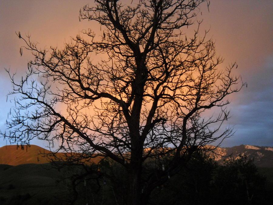 Bottle Tree Photograph by LaDonna Vinson