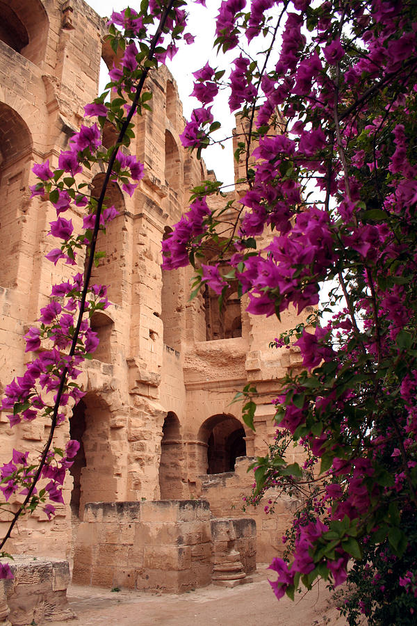 Bougainvillea Painting - Bouganville by Simona  Mereu